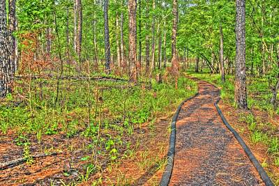 Photograph - Path In The Woods by Donald Williams