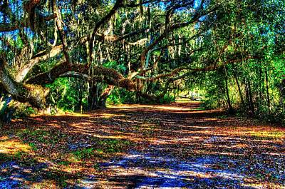 Photograph - Path In The Woods by Richard Zentner