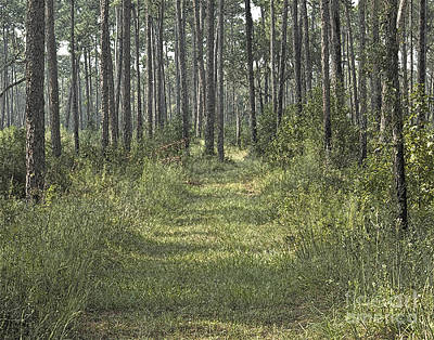 Photograph - Path In The Woods by Robert  Suggs