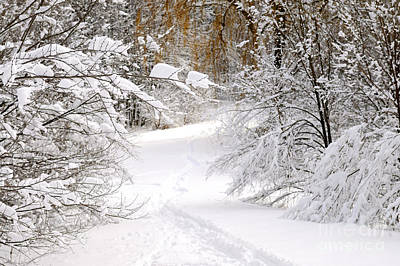 Photograph - Path In Winter Forest by Elena Elisseeva