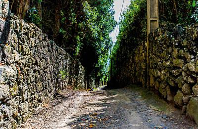 Photograph - Path Never Taken by Joseph Amaral