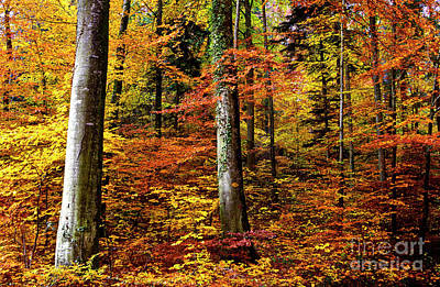 Print featuring the photograph Path Of Autumn 1 by Charles Lupica