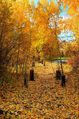 Art Print featuring the photograph Path Of Fall Foliage by Kevin Bone