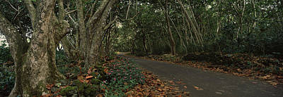 Fallen Leaf Photograph - Path Passing Through A Forest, Maui by Panoramic Images