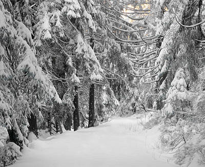 Cold Temperature Photograph - Path Through A Forest In Winter by Panoramic Images