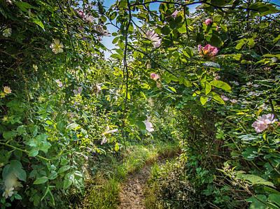 Photograph - Path Through A Wild Rose Hedge by Martin Liebermann