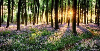 Sunrise Path Through Bluebell Woods Art Print