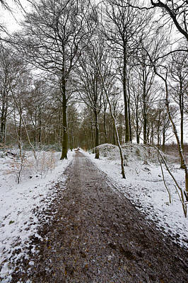 Photograph - Path Through Common Wood by Gary Eason