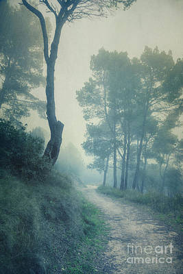 Path Through Pinewood Mist Art Print