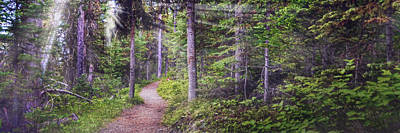Photograph - Path Through The Forest by Ken Smith