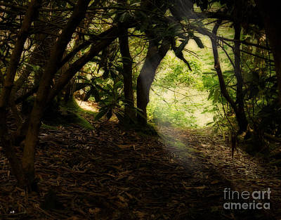 Photograph - Path Through The Wilderness by Sandra Clark