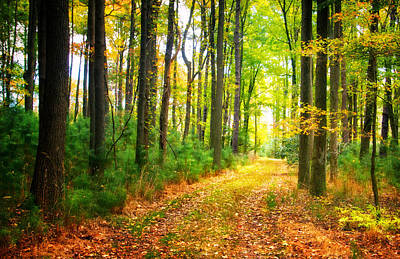 Photograph - Path Through The Woods by Carolyn Derstine