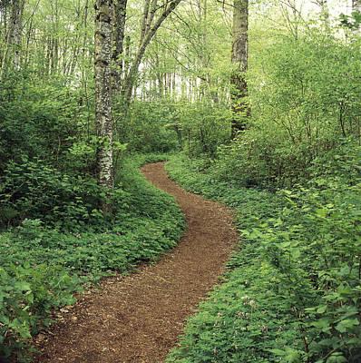 Path Through Woods Print by Bert Klassen