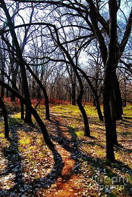 Photograph - Path Thru The Oaks by David Taylor