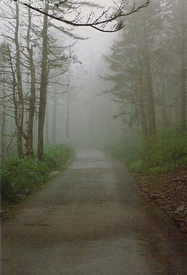 Path To Clingmans Dome Art Print by Karin Thue