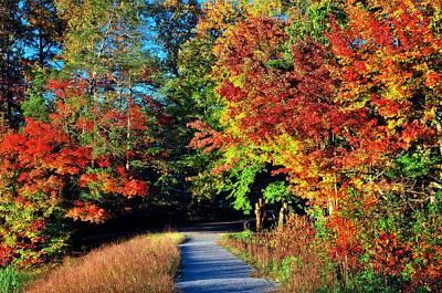 Photograph - Path To Fall  by Lynn Bauer