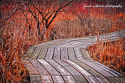 Path To Nature Art Print by Frank Sciberras