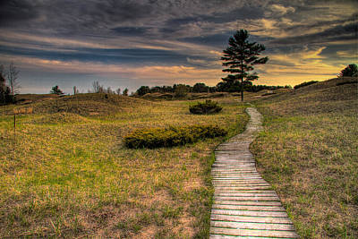 Ethereal - Path To The Pine by Jeffrey Ewig