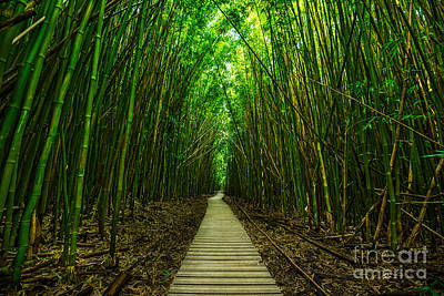 Bamboo Photograph - Path To Zen by Jamie Pham
