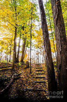 Photograph - Paths Along The Maumee River 3 by Michael Arend