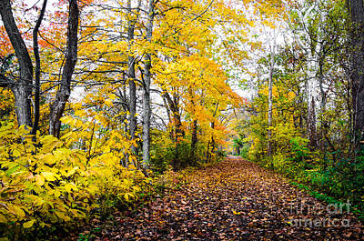 Photograph - Paths Along The Maumee River 4 by Michael Arend
