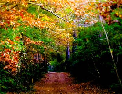 Path In Life Photograph - Paths We Choose by Karen Wiles