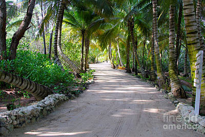 Coconut Photograph - Pathway by Carey Chen