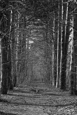 Photograph - Pathway by David Armstrong