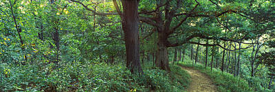 Mississippi River Scene Photograph - Pathway In A Forest, Mississippi River by Panoramic Images
