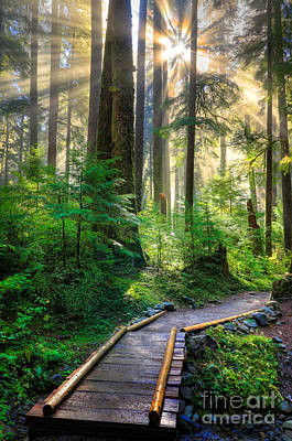 Olympic National Park Photograph - Pathway Into The Light by Inge Johnsson