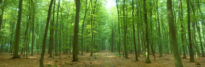 Pathway Through Forest, Mastatten Art Print by Panoramic Images
