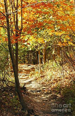 Pathway Through The Woods Art Print by Kathleen Struckle