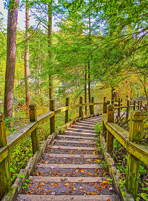 Pathway To The Falls  Art Print by SCB Captures