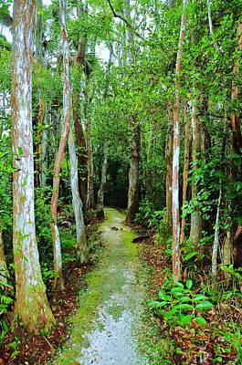 Pathway To The Rainforest Print by Kicking Bear  Productions