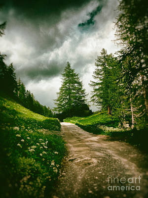 Photograph - Pathway With Pines by Silvia Ganora