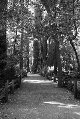 Photograph - Pathways Bw by Deana Glenz