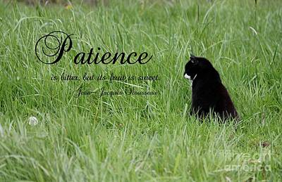 Photograph - Patience by Erica Hanel