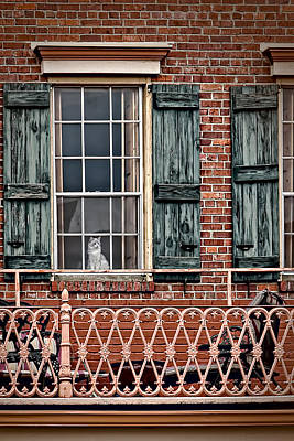 Photograph - Patience by Maria Coulson