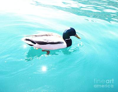 Print featuring the photograph Pato by Vanessa Palomino