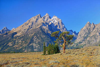 Tetons Photograph - Patriarch Tree And The Cathedral Group by Greg Norrell