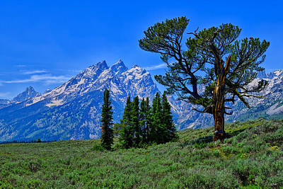 Photograph - Patriarch Tree by Greg Norrell