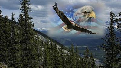 Digital Art - Patriot American Eagle by Kelly Turner