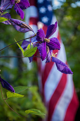 Photograph - Patriotic Clematis by Gene Sherrill
