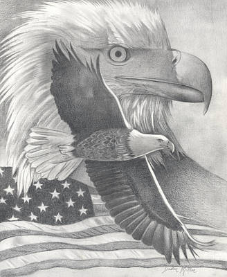 Drawing - American Bald Eagle by Dustin Miller
