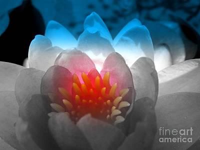 Photograph - Patriotic Flower by Renee Trenholm