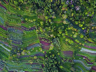 Rice Wall Art - Photograph - Pattern by Farid Yuwono