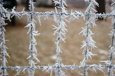 Photograph - Patterned Frost by Dakota Light Photography By Dakota