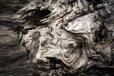 Patterns Are Found In The Driftwood Art Print by Robert L. Potts