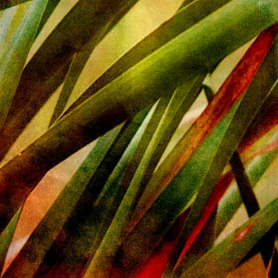 Patterns In Nature No.3 Art Print by Bonnie Bruno
