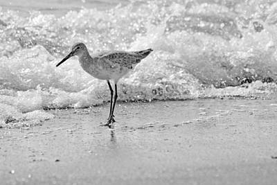 Sandpiper Wall Art - Photograph - Pause by Betsy Knapp